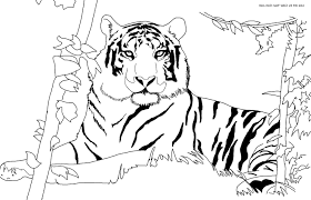Small Picture cat lion and tiger coloring pages twisty noodle fantasy