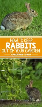 every loves the easter bunny right but it s not quite as cute when rabbits save