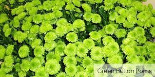 green flower logo name