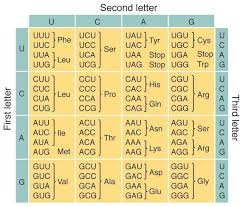 Trna Codon Chart There Are 64 Codons In The Genetic Code And There Are Only