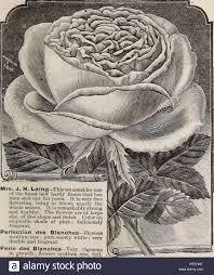 Descriptive Catalogue Of Fruit And Ornamental Trees