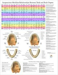 Tooth Organ Meridian Chart Acupuncture Meridian Teeth And Body Organs Poster