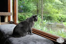 Athena watches family room window spring - Life with Dogs and Cats : Life with Dogs and Cats