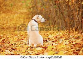 Bildresultat för höst hund