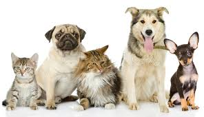 Image result for cat dog rabies clinic