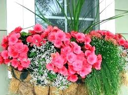 outdoor flowers artificial oor for window boxes best and plants winter in pots flower