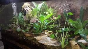 aquarium garden. Interesting Aquarium Inside Aquarium Garden O