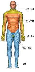 Dermatomal Pattern Mesmerizing Dermatomes