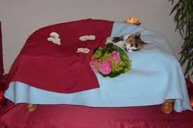 Abschied Von Der Geliebten Katze Einschläfern Beerdigung