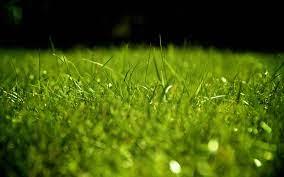4k Wallpaper Green Grass