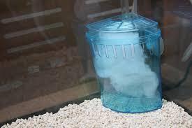 Come coltivare delle piante in un acquario dacqua dolce