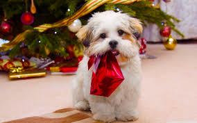 christmas puppy iphone wallpaper. Perfect Iphone Christmas Puppy Wallpapers For Iphone Wallpaper