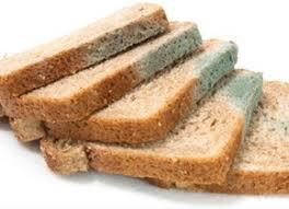 Выращиваем плесень на хлебе в домашних условиях Студенческая жизнь Почему именно хлеб и откуда на наших продуктах питания плесень