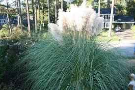 Hameln Ornamental Grass Garden Design Ideas
