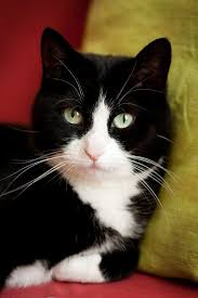 Cute cats and kittens, <b>Cool cats</b>, Pretty cats