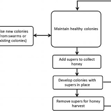 Honey Processing Flow Chart Hand Picked Honey Flow Chart Process Flow Diagram Of Natural