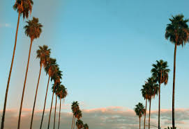 palm trees tumblr vertical. Download Palm Trees Tumblr Vertical
