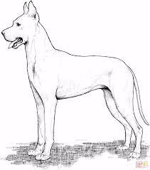 Kleurplaten Deense Dog Duitse Herder Kleurplaat T6qf79uhe9