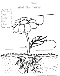 Parts Of A Plant Coloring Page Parts Of Garlic Plant Coloring Page