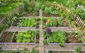 Crop Rotation Chart Vegetable Gardening Grow To Eat Plan A Crop Rotation For Healthy Veg Next