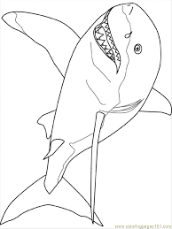 Small Picture Fresh Great White Shark Coloring Pages 96 For Free Coloring Book