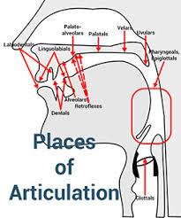 Places Of Articulation The Complete List With Examples