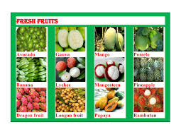 tropical fruit names. Simple Fruit Exotic FruitFresh VegetableTropical Fruit  Buy Fruits And Vegetables  Names Product On Alibabacom For Tropical X