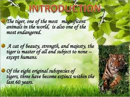 save tigers by class vii