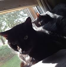 caturday blogging black kitty edition angry black lady chronicles xposted from ishouldhavebeenablogger