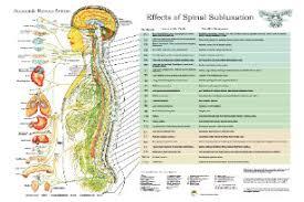 Organized Chiropractic Charts Chiropractic Technique Chart