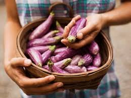 grow beautiful and tasty eggplant in pots