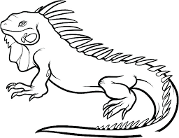 Australian Animals Coloring Pages To Print Animals Colouring Pages