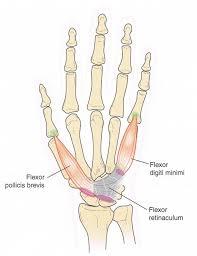 finger joint names. finger joint names a