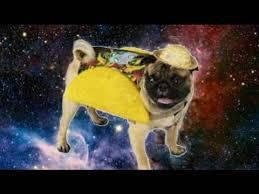 pug in taco costume. Delighful Taco PUG EATS TACO In Pug Taco Costume