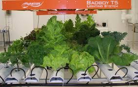 indoor gardening supplies. Indoor Gardening With Hydroponics. The . Supplies