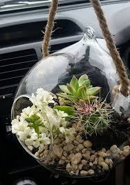 awesome terranium made from just popping into kmart and bunnings a