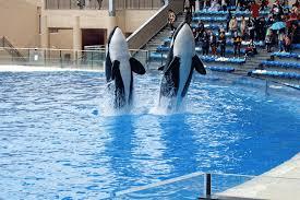 captive whales