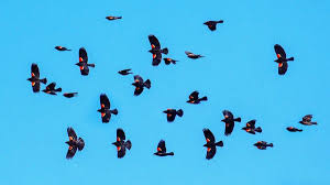 Opinion The Crisis For Birds Is A Crisis For Us All The