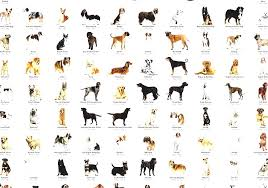 Dog Breed Chart List Of Dog Breeds Dog Breed Chart