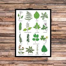 A3 Weeds Print Weed Identification Chart Horticulture Study Of Plants Weeds Science Gardeners Gardening Art Print Unframed