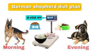 German Shepherd Full Diet Plan Homemade Food For Dogs German Shepherd Chart In Hindi