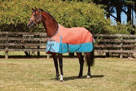weatherbeeta comfitec plus dynamic lite horse turnout rug