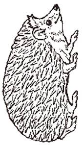 Small Picture Hedgehog reversed coloring page