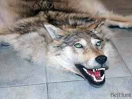 wolf skin rug fake with head spotcard co