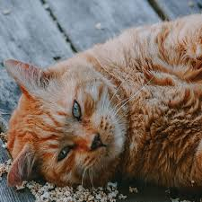 How To Help A Cat Lose Weight Mud Bay