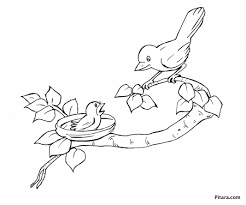 baby birds drawing for kids.  Baby 2135x1776 Baby Bird Coloring Pages Page For Kids And Birds Drawing O