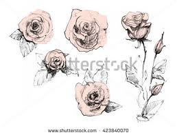 realistic pencil drawn rose flowers background ink pencil watercolor