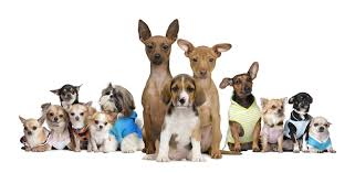 lots of dogs together. Brilliant Lots Image Lotsofdogs On Lots Of Dogs Together PetsPyjamas