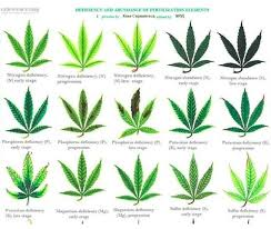 Cannabis Problem Chart Pin On My Garden