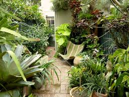 Small Picture Peter Nixons Sydney subtropical courtyard garden Gardens